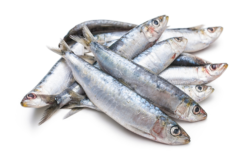 Big are sardines bad for you