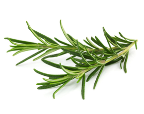Thumb is rosemary bad for you