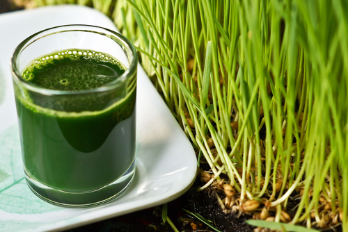 Big is wheat grass bad for you