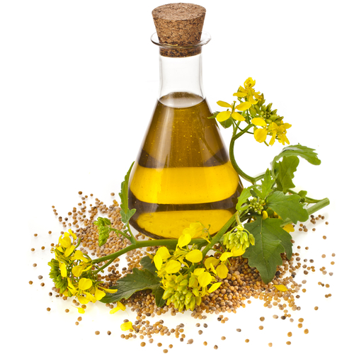 Big is canola oil bad for you.