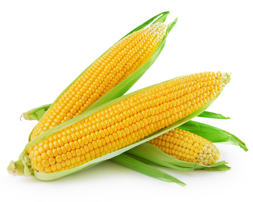 Big is corn bad for you
