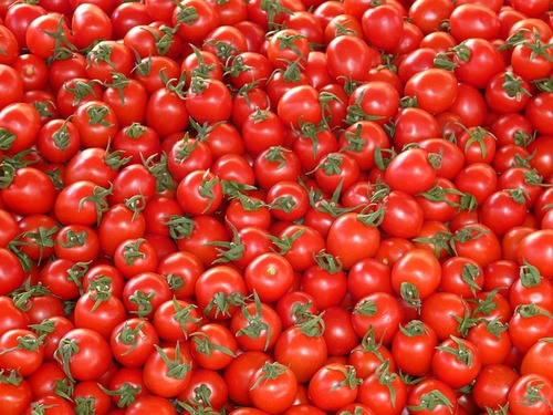 Big are tomatos bad for you