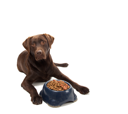 Big is dog food bad for you