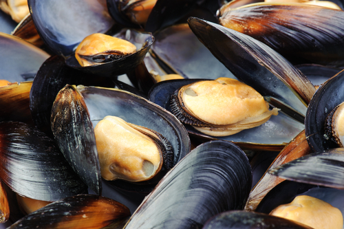 Big are mussels bad for you