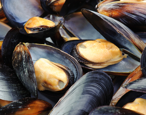 Thumb are mussels bad for you