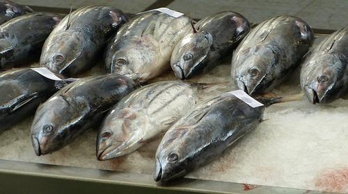 Big is tuna bad for you
