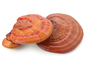 Thumb is ganoderma bad for you