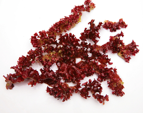Thumb is carrageenan bad for you 2