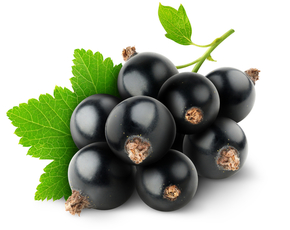 Thumb are black currants bad for you