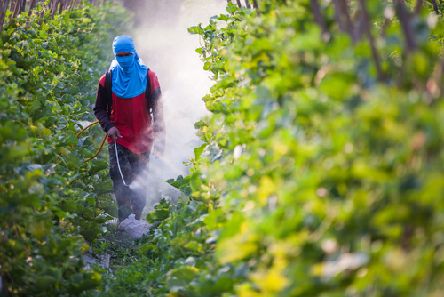 Big are pesticides bad for you 2