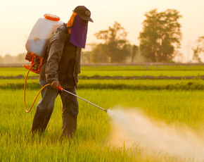 Thumb are pesticides bad for you
